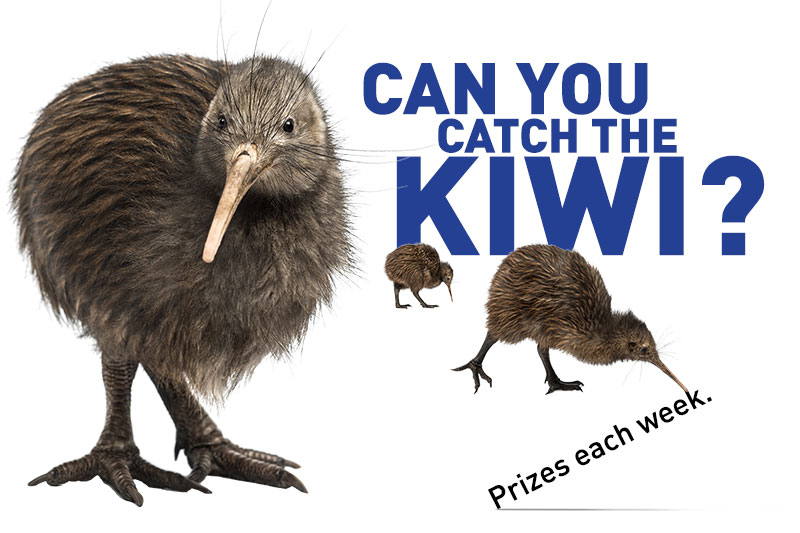 Catch the Kiwi Prize Draw