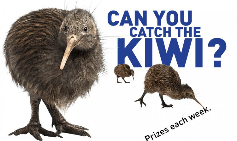 Catch the Kiwi Prize Draw